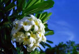 fiori tropicali
