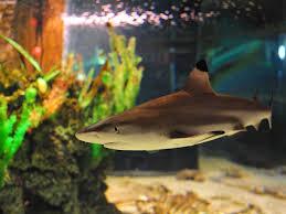 Oceanarium Sea Aquarium