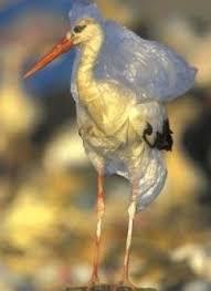 impact of plastic bags