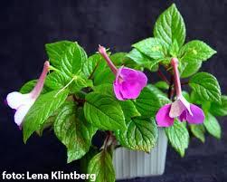 گیاهان زینتی