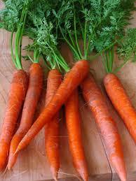 carrot photos