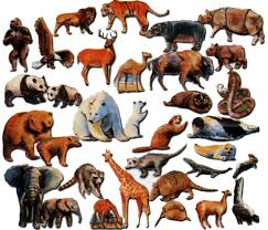 pictures of all kinds of animals