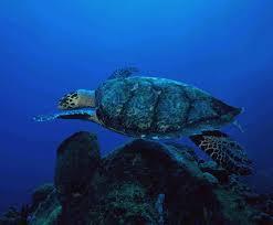 ocean consumers