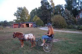 full size horse