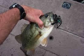 jig bass