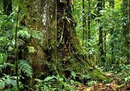 images of the amazon rainforest