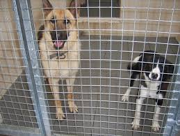 dogs in the pound