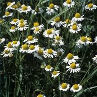 flower field guide