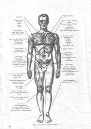 anatomija ljudskog tijela