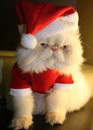 crazy christmas hats
