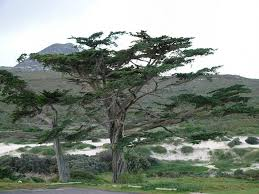 african trees pictures