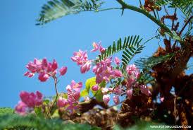 flora de asia