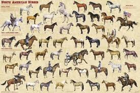 horse breed posters