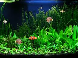 free aquarium backgrounds