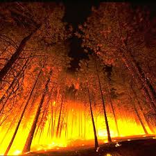 fire forests