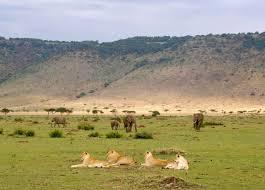 african lions habitat