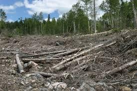 destruction of the forest