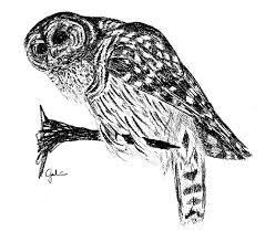 bird illustrators