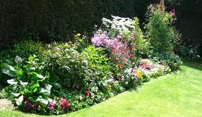 photos of garden flowers