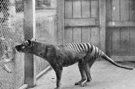 pictures of extinct species