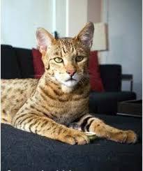 $20000 cat
