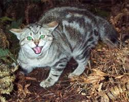 pictures of feral cats