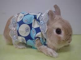 rabbits clothes