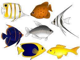 fish vector art