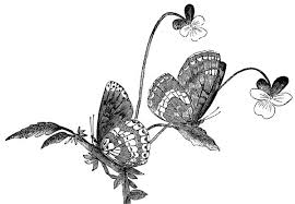 art butterflies