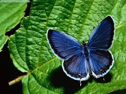 mariposas fotos