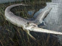 gator snake