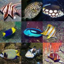 great barrier reef fish species