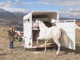 horse accessory