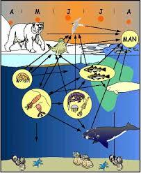 deep sea food web
