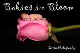 rose babies