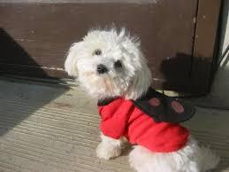 bug dog