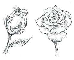 easy roses to draw