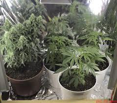 growrooms