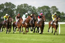 races horse