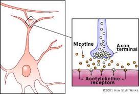 nicotine brain
