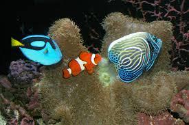 marine fish pictures