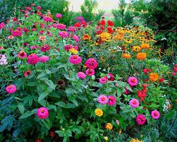 image des fleurs