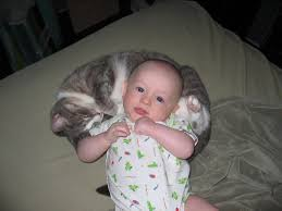 cats baby
