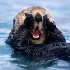 picture of a sea otter