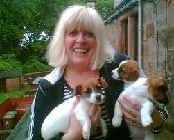 jack russels puppies