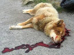 died dog