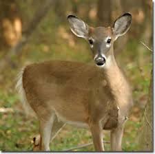chesapeake bay animals
