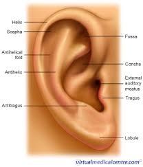 ear skin
