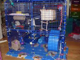 cool rat cages