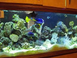 180 gallon aquariums